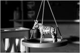 Was wiegt ein Zebra